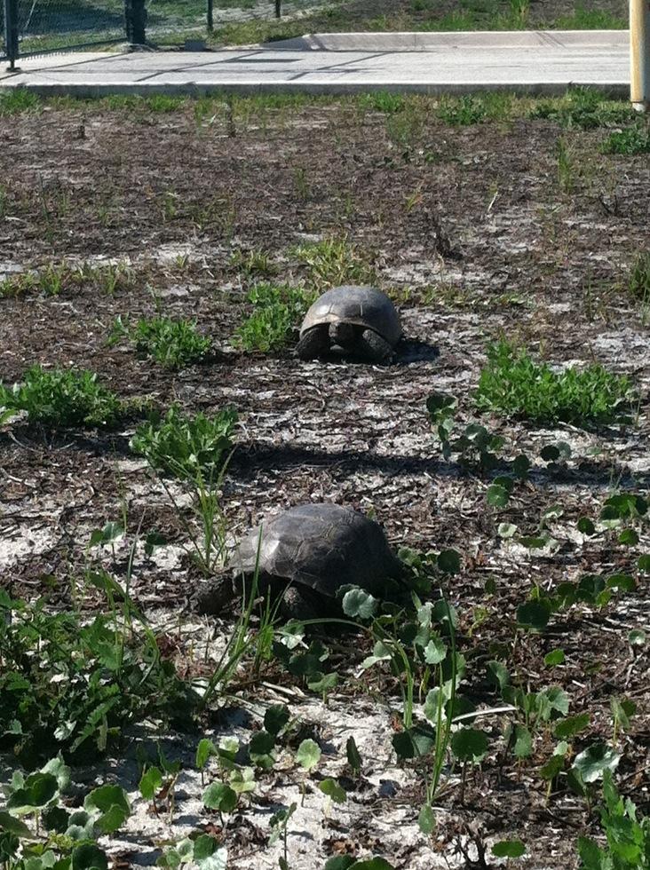 Local turtles
